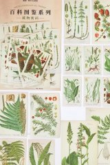 Kawaii Japanese Washi Paper Planner Supplies Sticker Sack - Encyclopedia Plant - Fern