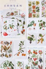 Kawaii Japanese Washi Paper Planner Supplies Sticker Sack - Encyclopedia Plant - Berry Garden