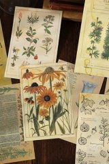 Vintage Style DIY Supplies Deco Paper Materials Pack - time after time - grass plants